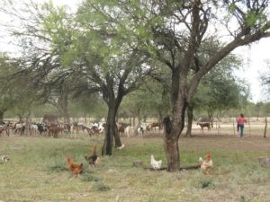 Photo: Livestock rearing replacing natural forest (Credit: Esteban Capella)